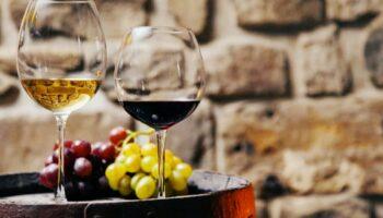 vino-top-10